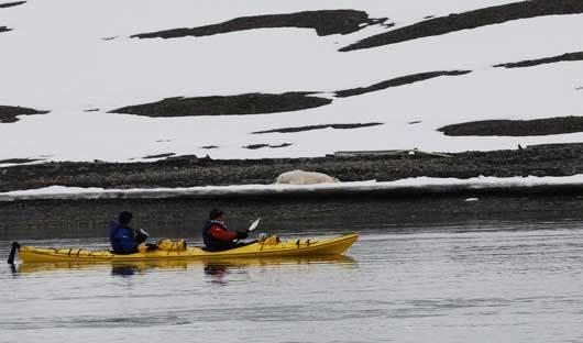 Kayaking-Spitsbergen-Polar-bear-Arctic-Travel-Centre