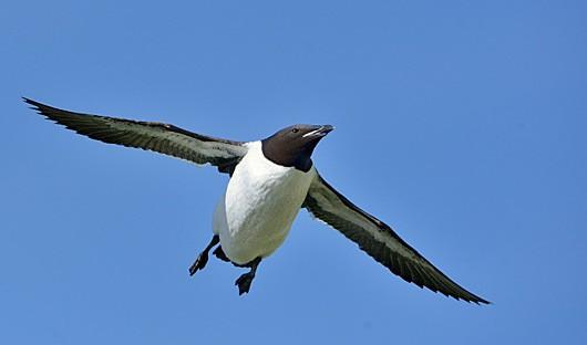 Arctic bird life