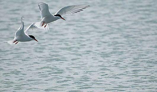 birds-at-sea