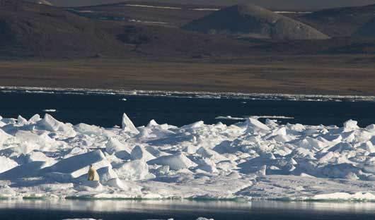 Baffin-Island--Polar-bear-on-ice-floe