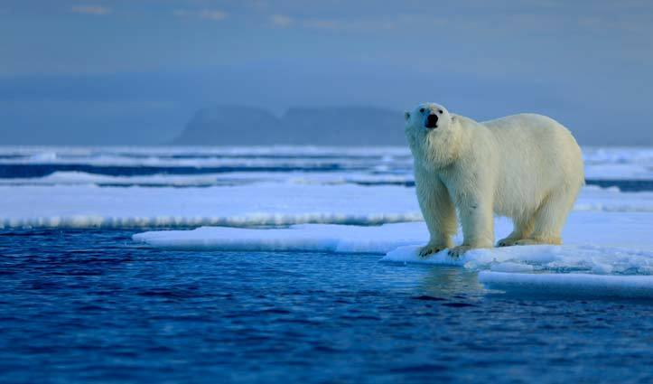olar-bear-on-ice-flow-Arctic-SS