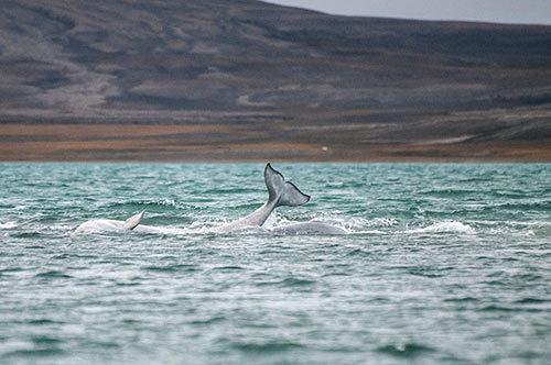 At Sea Dolphin