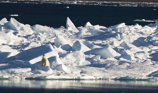 Baffin-Island-Plar-Bear-_386036635