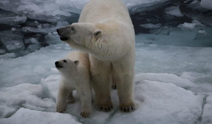 Mum-&-Cub-TB-blog