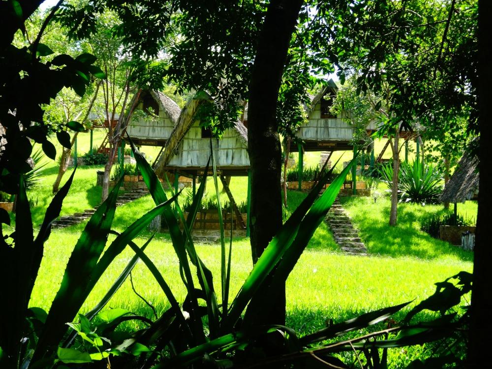 Las Terrazas, Cuba by Dorina Caccamo