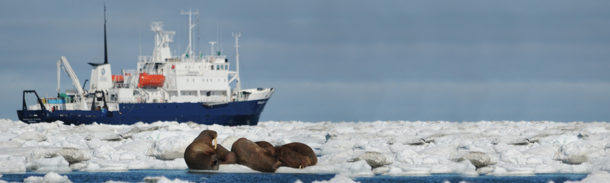 Spirit of Enderby - Expedition Cruises   Arctic Travel Centre