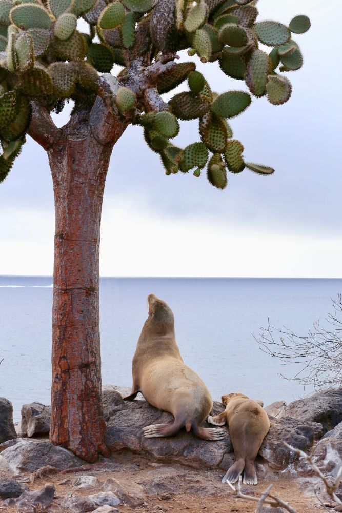 Galapagos Locals by Jacqueline Schofield