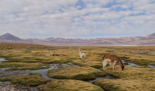 Feature Image Bolivian Altiplano by Doug Dickson
