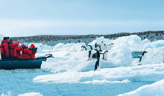 Hapag Lloyd Penguins Antarctica