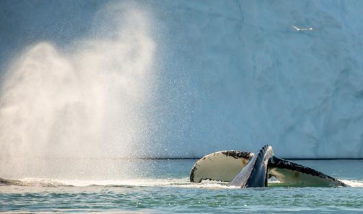 Iceland Pro Cruises - Ilulissat
