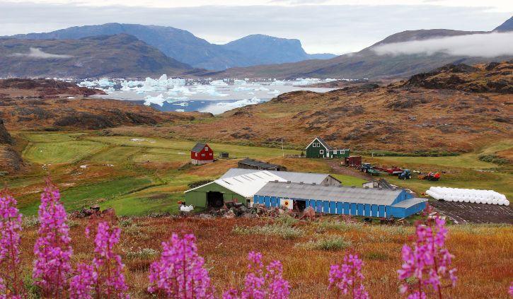 Iceland Pro Cruises - Narsarsuaq