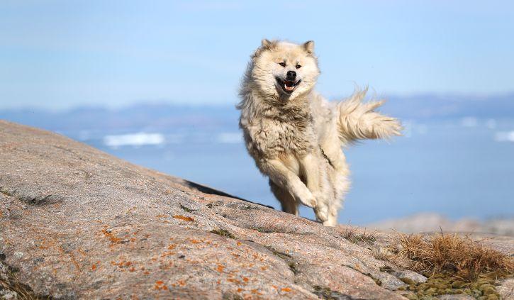 Sledge Dogs - Iceland Pro Cruises