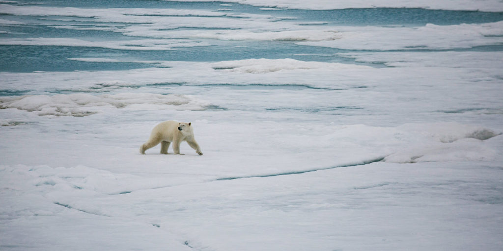 Poseidon Only - North Pole Polar Bear