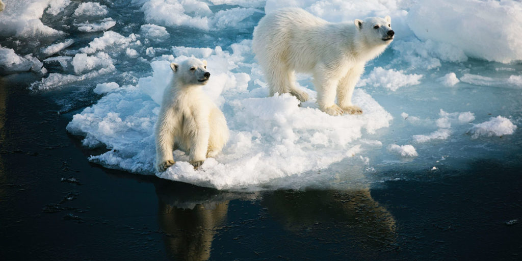 Poseidon Only - Polar Bear Cubs North Pole