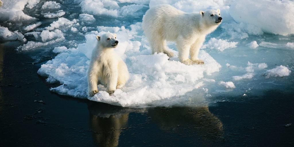 Poseidon Only - Polar Bear Cubs North Pole