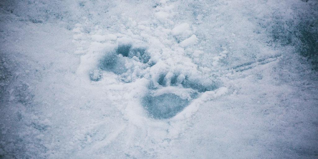 Poseidon Only - Polar Bear Footprints