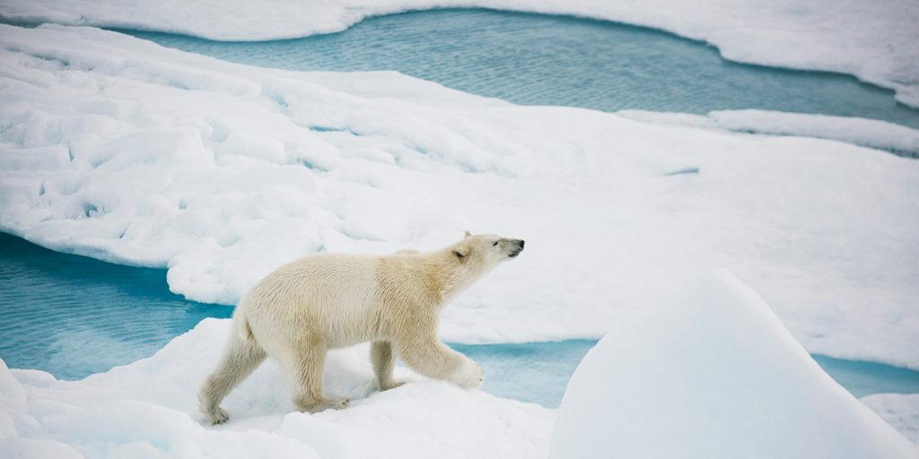 Poseidon Only - Bear at North Pole