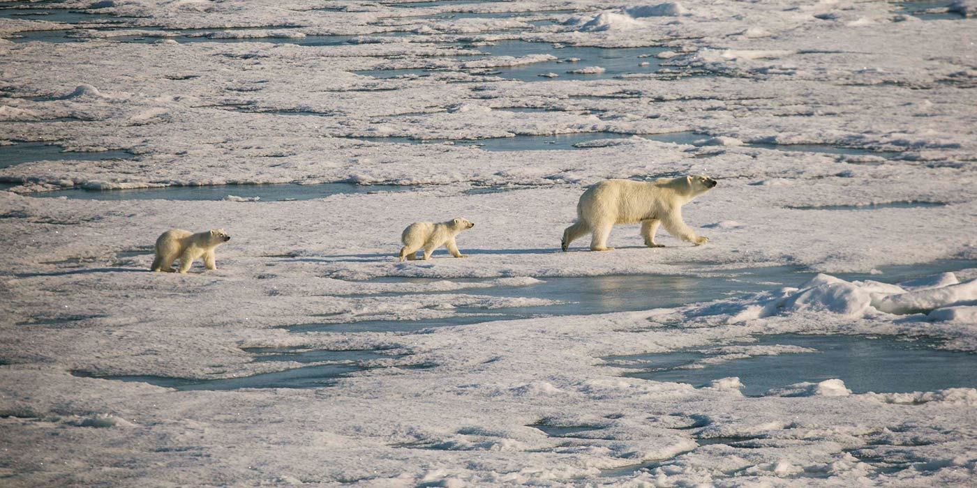 Poseidon Only - Polar Bear and Cubs North Pole