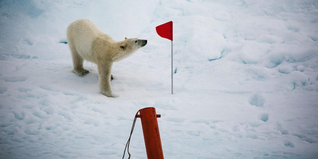 Poseidon Only - Polar Bear with Flag