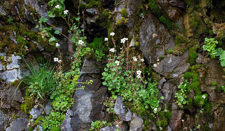 Hanging Garden at 14 July Glacier
