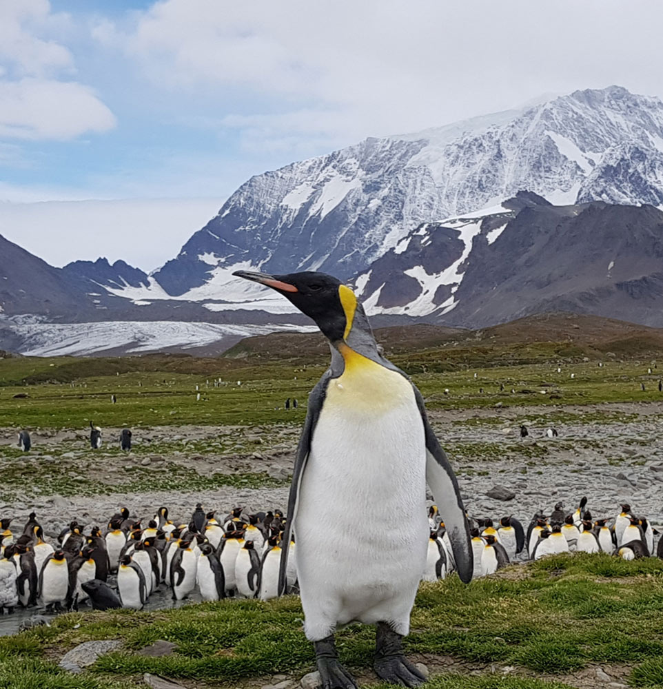 Front and Centre at Sailsbury Plain, South Georgia by Gina Kikos
